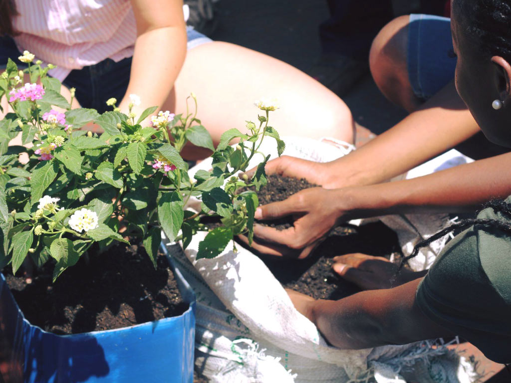 Let's plant a community garden together